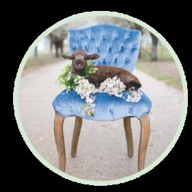 circle_lamb_on_maxine_chair